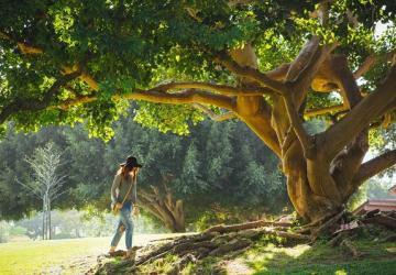 Tempo das raízes