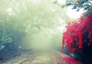 Interroga o nevoeiro, não a clareza