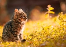 A hora do gato